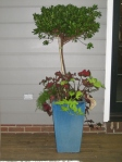 Garden tour- one of deck azalea topiaries