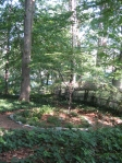 Garden tour- view of 'Ben's garden' from woodland path
