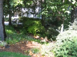 Garden tour- view of side yard woodland path from street