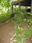 Garden tour- woodland path under deck